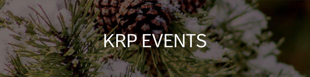 closeup of pine cones and snow